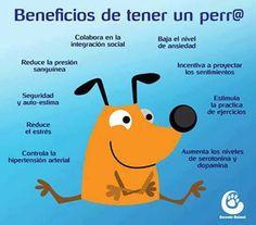 Beneficios de tener un perro:) Yo tengo 4 :) :) :) :)