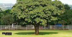 Como nascem, crescem, vivem e morrem as árvores?
