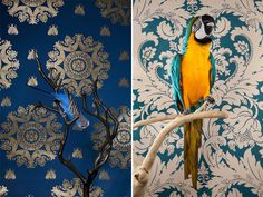 Birds Of A Feather, a live portrait series by Claire Rosen, is ridiculously good. The vintage wallpaper backdrops really accentuate and highlight the colors in each bird, which range from the common Parakeet to the exotic Hyacinth Macaw. The combinations are brilliant and simply happy.