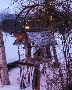 #aviary #sapporo #hokkaido #japan #bird #farmyard  #instagood #chabosampo #photoshoot #photography #photooftheday #tbt #portrait #photo #instadaily  #japantravel #landscape #amazing #photo_shorttrip #travel  #solo #yolo #fun #look #awesome #cool #happy #hello #JapanTravelSapporo