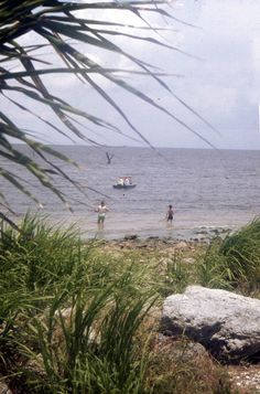 Florida Memory - View showing people fishing near the shore of Lake Okeechobee in the Florida Everglades.