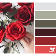 Paper Roses ❤ liked on Polyvore featuring backgrounds, colors and seeds