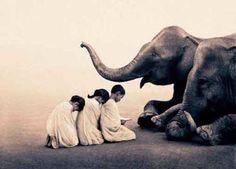 Gregory Colbert, Ashes and Snow Collection
