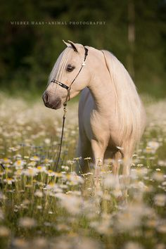 Wiebke Haas | animal photography » KLEIN ABER OHO!