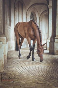 animal, animals, brown, cute, europe, horse, horses, nature, photography, pic, wallpaper, wallpaper iphone animal