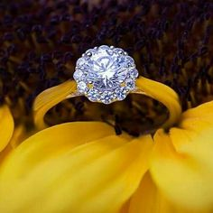 Stunning ethically sourced engagement rings complete with center diamonds by Naledi are available Tax Free at Jewelry Studio in Bozeman, Montana. Where Montana Gets Engaged!  www.Bozemanjewelry.com