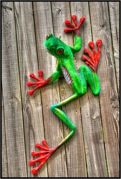 red tree frog Photo by greg sagayadoro on Fivehundredpx