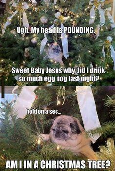Christmas escapades of an adorable pug. Always call on sweet baby Jesus Lol