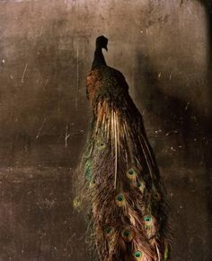 """""""The Immortals."""" Photo series by Marc Dantan of the aftermath of a fire at Deyrolle's Taxidermy. Photography Collage, Paint Photography, Animal Photography, Digital Photography, Nature Photography, Zoo 2, Tim Walker, Animal Fashion, Taxidermy"""