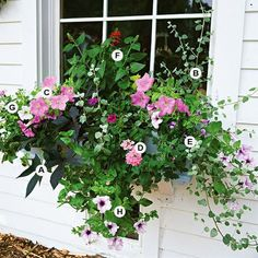 Colorful Window Box Garden  Shades of pink and purple harmonize beautifully to create a stunning container.