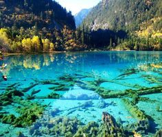 Just imagine how incredible it would be to snorkel here! Crystalline Turquoise Lake, Jiuzhaigou National Park, China