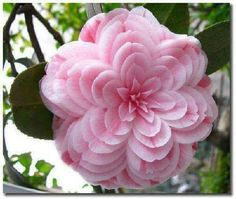 Pretty Flower 50 most beautiful flowers in the world | flowers, flower and plants