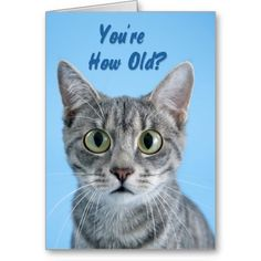 22 Best Cat Birthday Cards Images In 2019