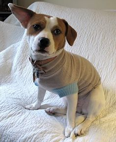 DIY Dog Sweater- keep your dog warm by recycling an old sweater to fit him/her. Your pet will love their custom couture, and the environment will love it to!