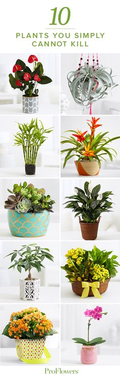 You may not have a green thumb…but you can certainly look like you do! 10 plants you can't kill!