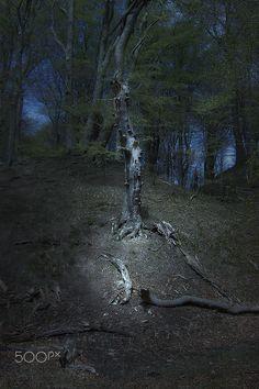 Der Tod des Baumes - Abgestorbener Baum am Hang im Wald.
