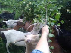 Life from my point of view! My Point Of View, Goat, Life, Goats