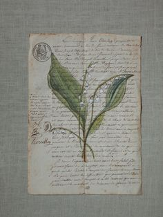 Hand-painted lily of the valley on found french paper by Halli Hitchner Fleur Papier