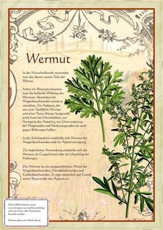 Wermut http://www.kraeuter-verzeichnis.de/