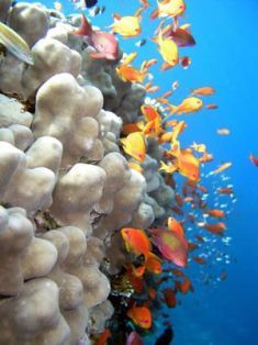 Beqa Lagoon Resort, Fiji with its barrier reef and Shark Reef Marine Reserve.