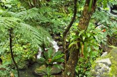 St Kitts  Rainforest Tour This rain forest tour takes approximately 2hours. Immerse yourself in ournatural paradise, learn about the plants that are used for medicinethat are throughoutthe forest, as well as a wide rangerange of Birdsand plants that are common withinthis eco-sanctuary. It is very likely that you maysee plenty of Mongoose and thegreen vervet monkeys along the way, as well as variousexotic birds and a vast varietyof tropical plants.During this Guided ...