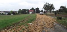 Kartoffeln auf Straße bei Eßleben: Traktor gestohlen, Erdäpfel abgeladen