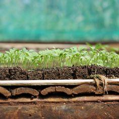::selamat pagi. berawal dari benih...