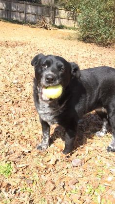 Lost Dog - Mix - Marietta, GA, United States 30060