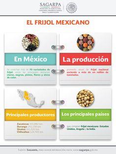 En México se cosechan más de 70 variedades de frijol, entre las principales destacan: claros, negros, pintos, flores y otros de color. SAGARPA SAGARPAMX