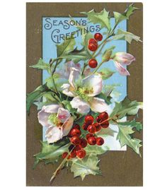 Vintage Postcard Pink Wild Roses with Holly by C Klein