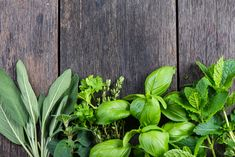 How to Grow Herbs and Spices Indoors