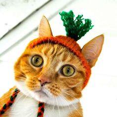 Carrot Top!