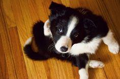 Lissie | Flickr - Photo Sharing!