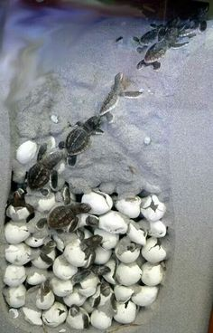 Aww baby turtles so cute!!