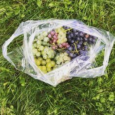 Blogue >>> Vous êtes à la recherche d'une activité familiale ce week-end?  Je vous propose une Virée d'automne à Saint-Paul-d'Abbotsford au #Vignoble Coteau-Saint-Paul et Roi de la fraise  + halte sucrée au #kandju #monteregie #automne #vignoble #vendanges #raisins #citrouille #courge #pommes #verger #tracteur       #mais #bonbons #jouerdehors #dansmaregion #quebecoriginal #blogue #mamanblogueuse #moicheznous