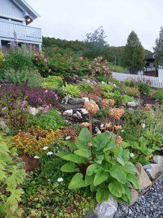 jardin en pente qui consiste en fleurs, arbustes fleuris et roches