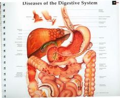 PLATENBOEK Anatomy and Pathology groot