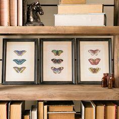 Found it at Joss & Main - Butterfly Framed Print