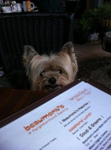 Tips and tricks for dining out with your dog!