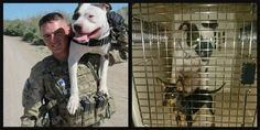First Military Pit Bull Comes Home ... To A Cage And Muzzle