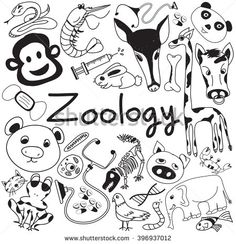 Zoology biology doodle handwriting icons of animal species and education tools in white isolated paper background for science presentation or subject title, create by vector