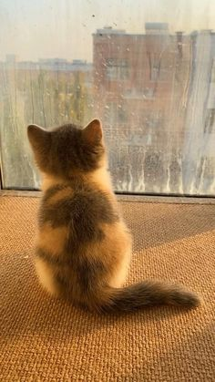 Funny Cute Cats, Cute Cat Gif, Cute Funny Animals, Cute Baby Bunnies, Cute Babies, Kittens Cutest, Cats And Kittens, Video Chat, Beautiful Kittens