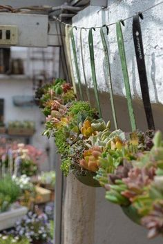 Old ladles upcycled into a succulent hanging garden.