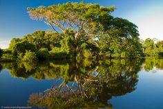 Reflecting on Yacuma River by Marc Shandro, via Flickr  Boliva