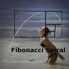 fibonacci spiral Isn't God's creation incredible? The Fibonacci sequence is found everywhere...