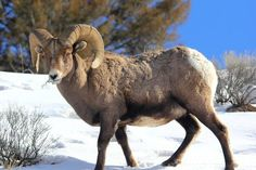 Lamar Valley - best place to view wildlife, according to TripAdvisor