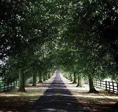 Notley Abbey - Grand driveway entrance