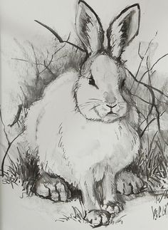 Rabbit pencil sketch.