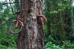 Bike in a tree