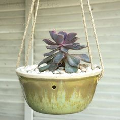 hanging succulent & pebble garden in hand-thrown pottery. let's do this.